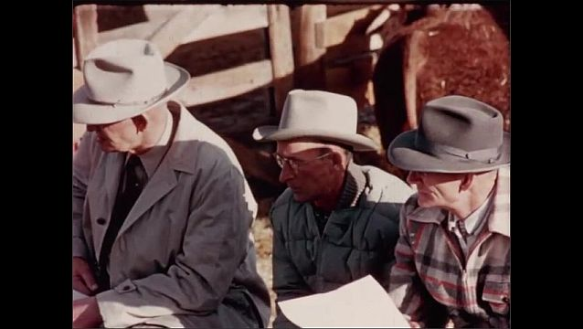 1950s: UNITED STATES: Bulls at Denver show. Cowboys look at bulls in pen.