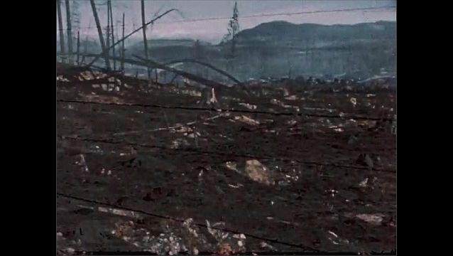 1950s: Fence and desert landscape. Burned forest. Blighted forest.