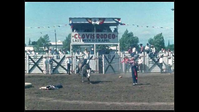 1950s: Men open gates at rodeo. Bull rider falls from bull at rodeo.