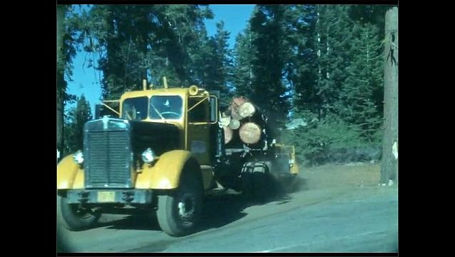 1950s: Trucks carry shipment of logs from forest.