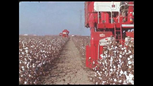 1950s: Men drive cotton picking tractors through fields and harvest cotton.