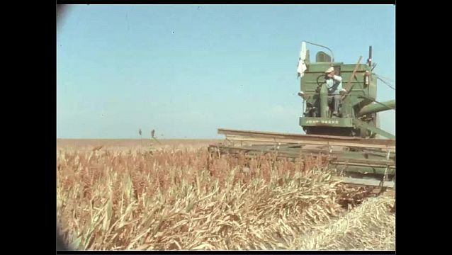1950s: Farmers drive combines over fields of wheat. Blades of combines cut and harvest wheat in field.