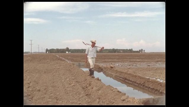 1950s: Man carries hovel and walks by irrigation ditch in farm field.