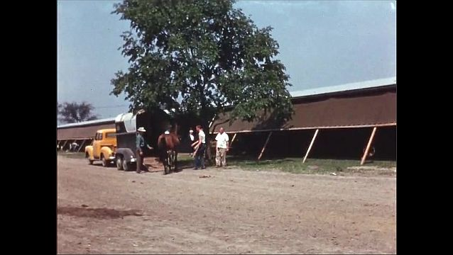 1960s: UNITED STATES: horse walks down slope from box. Visit to stables