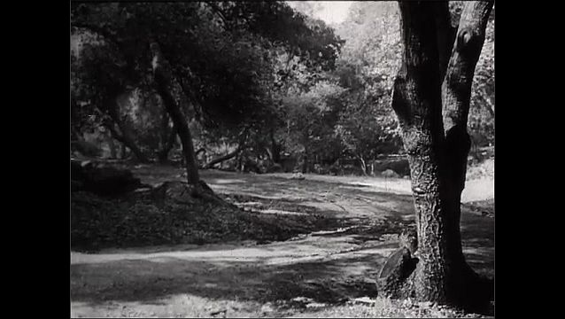 1940s: Focus in, soldier in forest runs behind tree. View of road. Soldier stands. Soldier runs to tree.