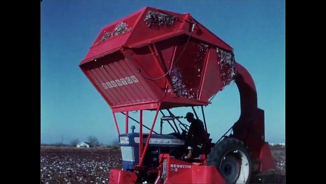 1950s: UNITED STATES: labour saving cotton harvester with high basket. Stability of tractor in field.