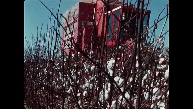1950s: UNITED STATES: harvester in field during cotton ginning season. SP55C field cleaner. Side view of field cleaner in cotton field.