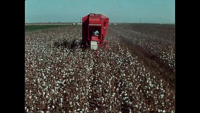 1950s: UNITED STATES: Hesston brush harvester collects cotton from field and plants. Cotton harvester development. Man drives tractor in field.