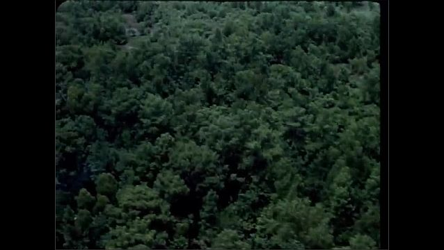 1940s: UNITED STATES: overhead view of trees in forest.