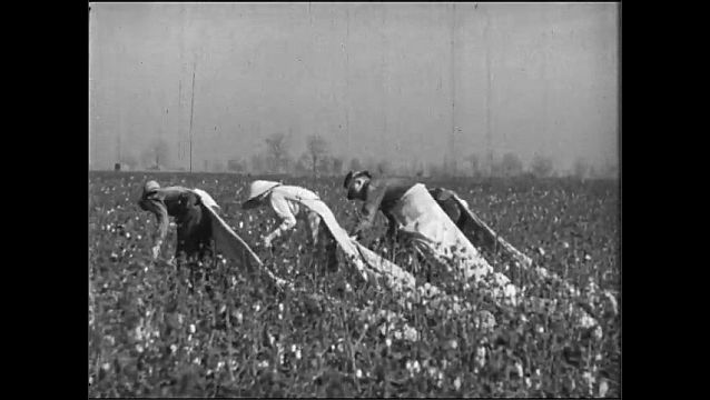 1920s: People pick cotton.