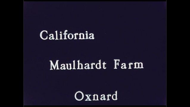 1960s: Plants run through machinery, on conveyor belt, into truck. Truck spreads plant pieces onto ground. Intertitle card. Field of flowers.