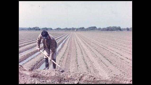 1960s: Intertitle card. Man drives tractor across field, plows dirt. Man shovels dirt, digs ditch. Men work in field.