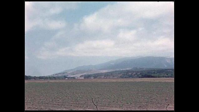 1960s: Man kneels down in field, looks at plants. Lettuce in ground. Farmland with crops. Salinas Valley vegetable exchange.