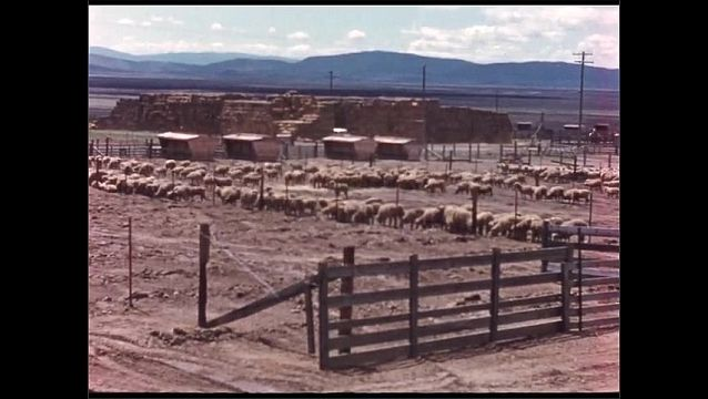 1960s: Tractor pulls rototiller over field. Title card. Sheep in pens on farm. Livestock building on farm.