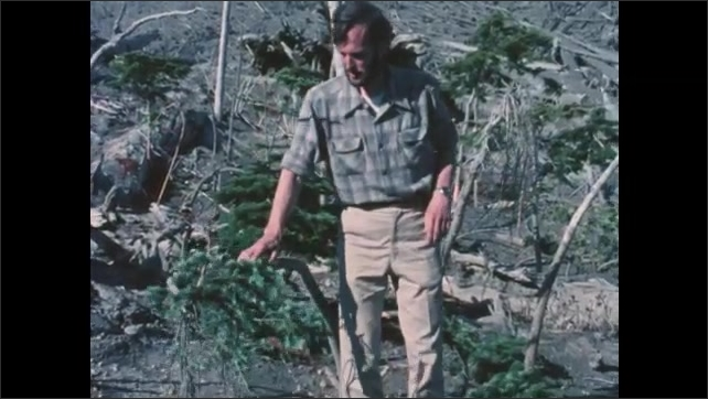 1980s Washington: Mountain.  Man stands and speaks.  Man touches plants and yanks on root.