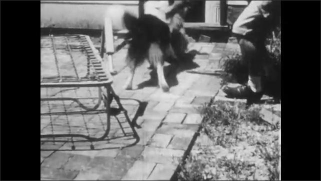 1950s: Boys sit at table, one points off to distance and young man looks. Two dogs fighting and man attempting to separate them. Boy turns water on and sprays hose. Boy walks on sidewalk.