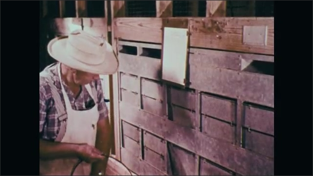 1970s: UNITED STATES: death in second week after radiation exposure at 1000 renkins. Egg production after radiation exposure. Man collects eggs.