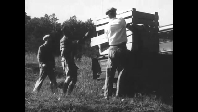 1930s:  Deer in field. Men feed deer with milk bottles next to crates. Men pick up deer and place them into crates.