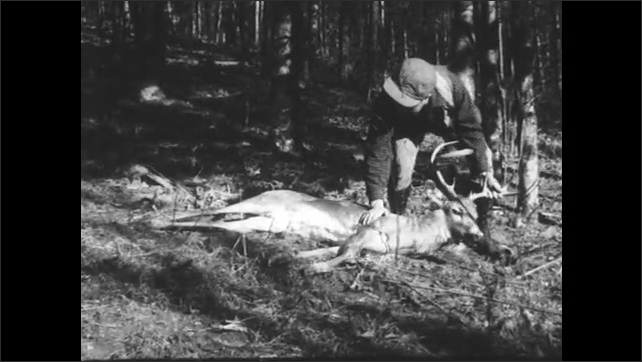 1930s: man in hat runs through woods, drops rifle and picks up dead deer by antlers. title card reads about trucks bring in hunters and game.
