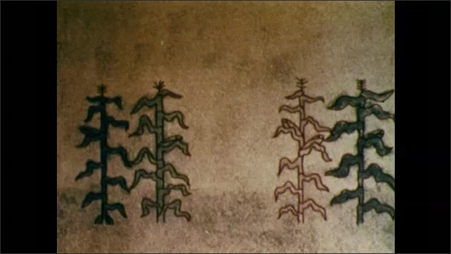 1970s: UNITED STATES: man writes notes in book. Crops in field. Animation of new tree breeds.