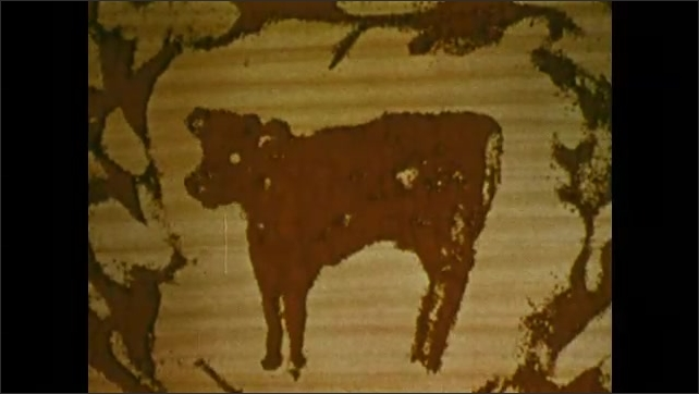 1970s: UNITED STATES: development of cow in laboratory animation. Cow in art. Frog cloning.
