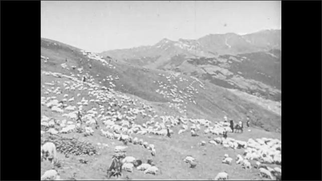 1940s: Men on horseback talk. Native man and woman listen. Horsemen guide sheep over hills. Female shepherd stands among flock of sheep. Combine cuts wheat in field.
