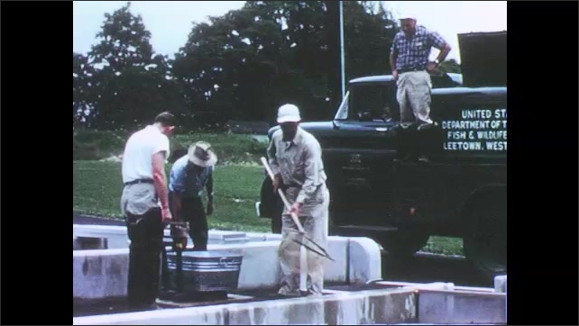 1960s: UNITED STATES: Man uses mechanical truck to move hatchery load. Men load distribution truck. Men lift produce on to truck