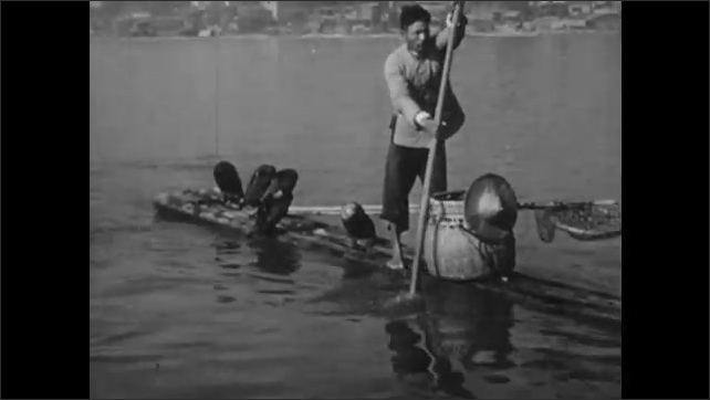 1940s: CHINA: boy rows boat. Children watch cormorant fisherman on boat. Man paddles boat. Cormorant stretches wings.