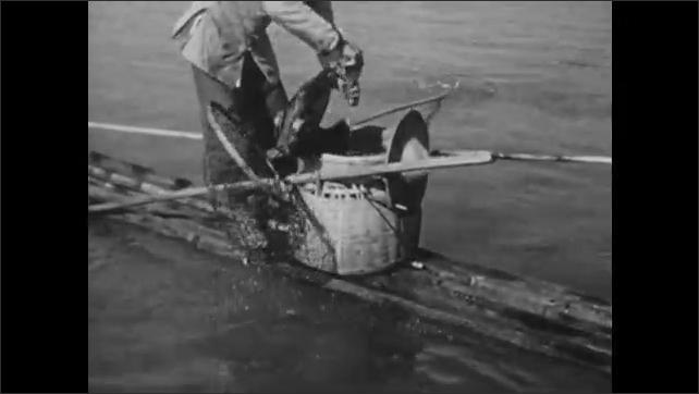 1940s: CHINA: children on sanpan watch cormorant fisherman. Man nets bird and fish. Child on boat watches birds.