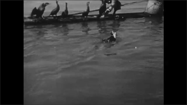 1940s: CHINA: man removes fish from beak of cormorant. Cormorant fisherman on boat.
