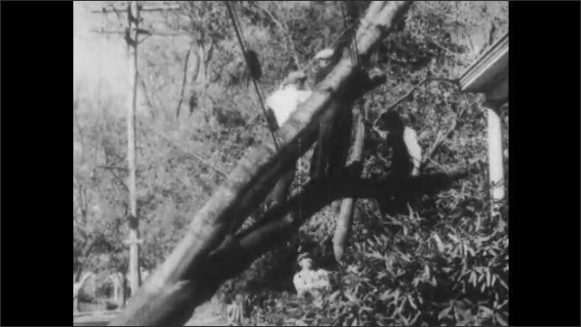 1940s: man drives bulldozer over debris in field as workers pick up boards. Men saw tree caught in power lines near houses. trees crush cars on street. trunk suspends on crane cable.