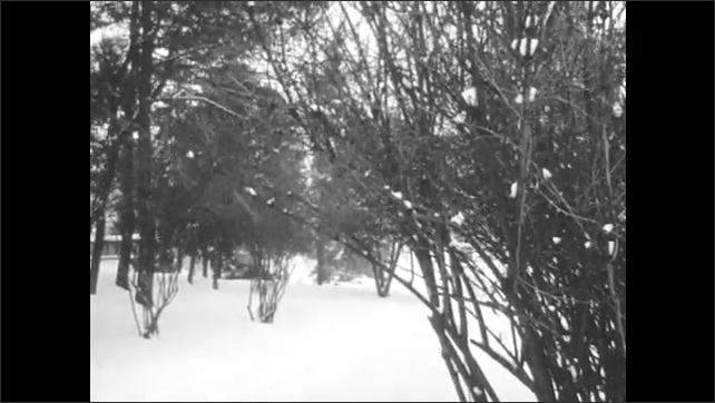 1960s: Mailman walks through yard.  Snow falls in forest.  Park.