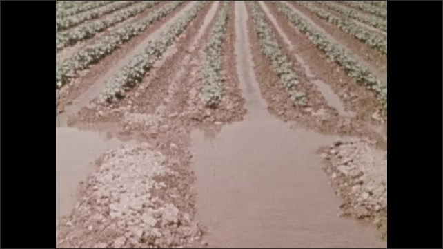 1970s: UNITED STATES: photographs of Earth. Crops and irrigation in field. Clouds over Earth. Sewage processing photo