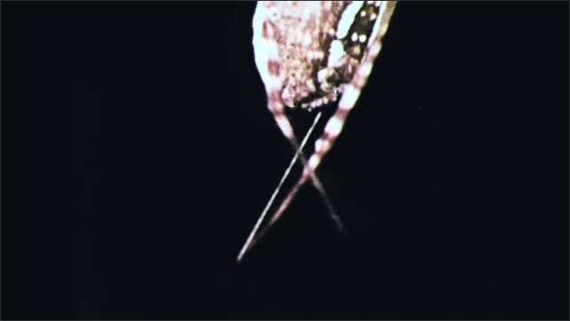 1970s: Spider uses back legs to pull silk from it's abdomen. Spider wraps insect in web.