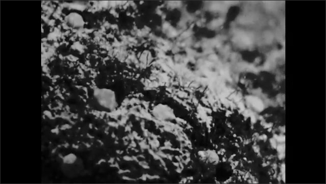 1960s: Sponge and coral structures on the sea floor.