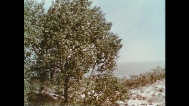 1960s: Trees and plants on beach. Insect digs in sand.