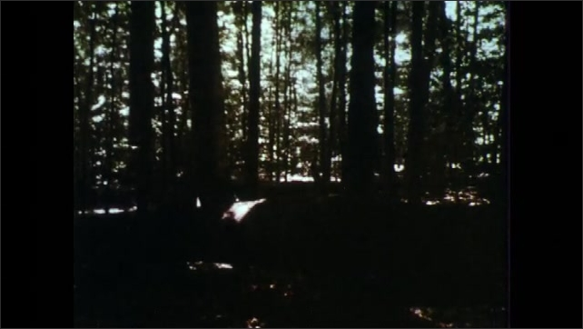 1960s: Trees, forest, fungus growing on log.