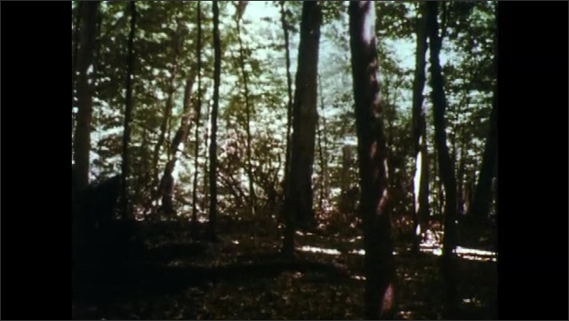 1960s: Pine tree. Oak trees. Beech and maple trees.