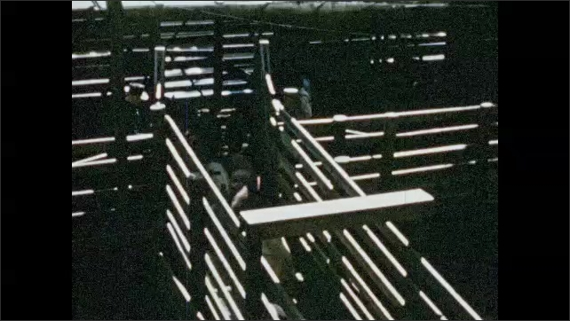 1950s: Man pumps oil into machinery. Men corral hogs down ramp and into meat packing facility.