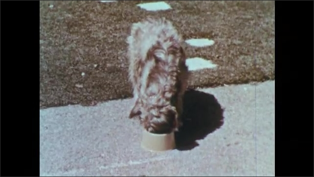 1950s: Man waves and walks toward house. Dog eats all the food in bowl and rabbit crawls under fence.