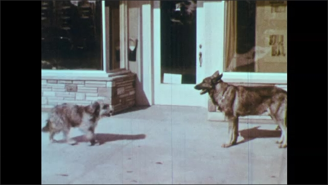 1950s: Front view of Granada Market. Two dogs meet in front of store and bark at each other.