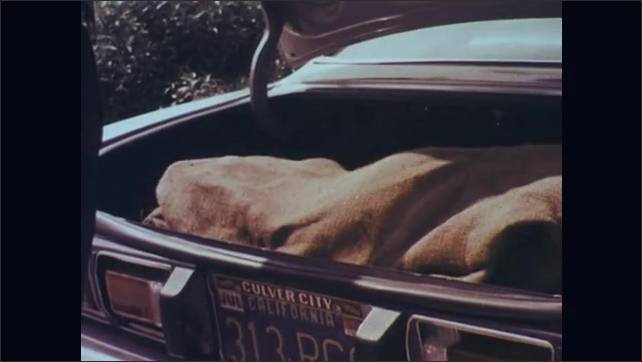 1970s: Man and woman stand next to police officer. Officer stands next to car and opens trunk. Officer grabs back inside trunk and holds it while talking. Man and woman listen. Officer holds bag.