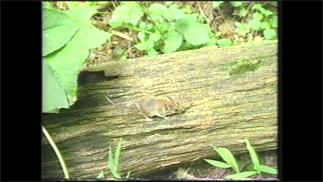 1990s: Fox. Squirrel in tree. Mouse on log. Map of United States of America.
