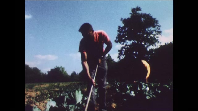 1960s: Man and woman tend to crops.