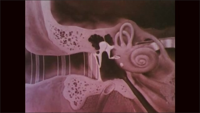 1960s: Animated sound waves move toward ear. Animated cross-section of inner ear. Animated ear drum and bones vibrate to sound waves.