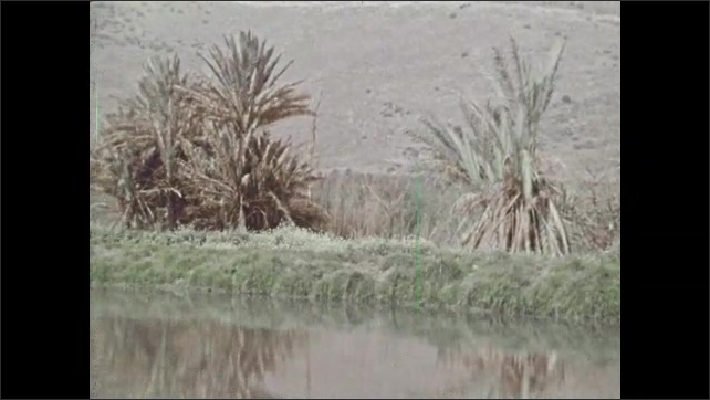 1970s: Tracking shot of trees. Close up of water, zoom out to riverbank. View of waterfall, pan to plants. Tilt up water tp rock wall.