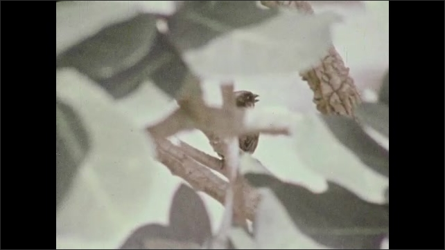 1970s: Tilt up pond to waterfalls. Low angle pan from grass to rock. View of bird through leaves. Close up of flowers, zoom out to plants.