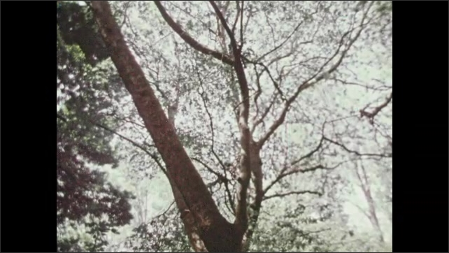 1970s: View of trees. Long shot of women by stream. Low angle of tree. Close up of branches. View of tree.