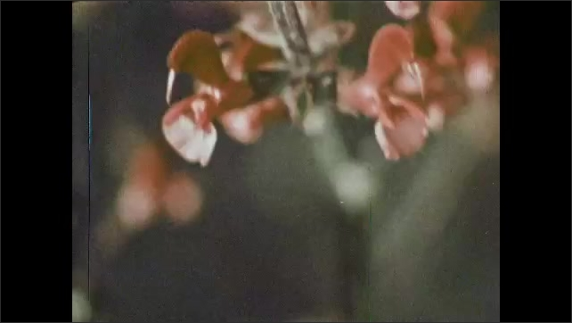 1970s: Zoom in on flowers. Close ups of flowers. Tracking shot of plants.