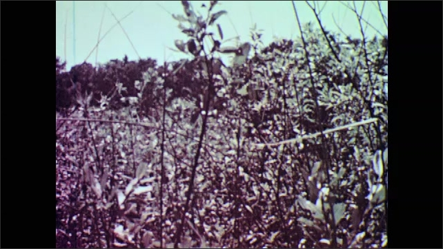 1950s: Pan across field, boy running. View of flowers. Feet walk through grass. Hand touching flower.